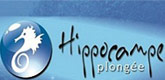 hippocampe Plongée