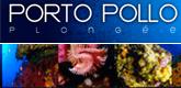 porto-pollo-plongée-165x80