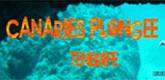 <span style='color:#dd3333;'>– CANARIES PLONGÉE TÉNÉRIFE-</span>